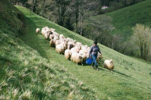 farmer and sheeps